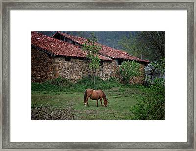 Horse In The Field Next To A Rural House Framed Print