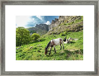 Horse On Balkan Mountain Framed Print