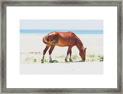 Horse On Beach Framed Print