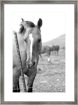 Horse Pasture  Framed Print by Dana Klein