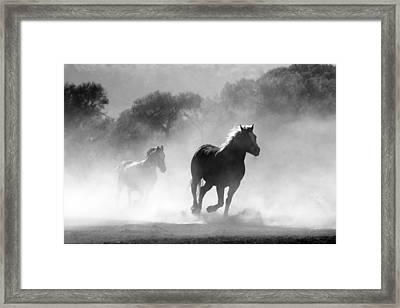 Horses On The Run Framed Print