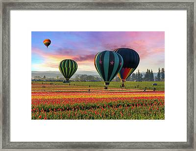 Hot Air Balloons At Sunrise Framed Print by David Gn Photography