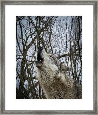 Howlin Framed Print