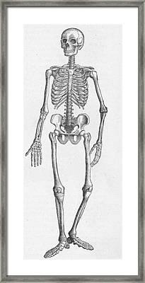 Human Skeleton Framed Print by Kean Collection