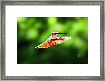 Hummingbird Flying Framed Print