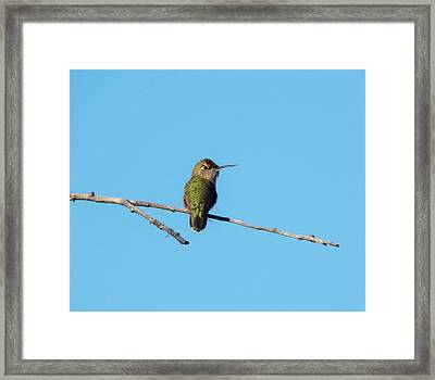 Framed Print featuring the photograph Hummingbird by Lukas Miller