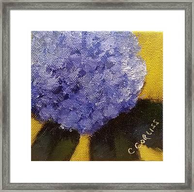 Hydrangea I Framed Print