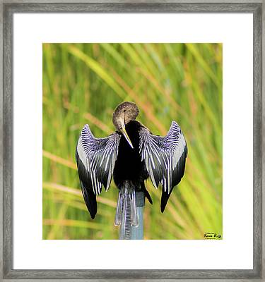 I Have An Itch Right There Framed Print