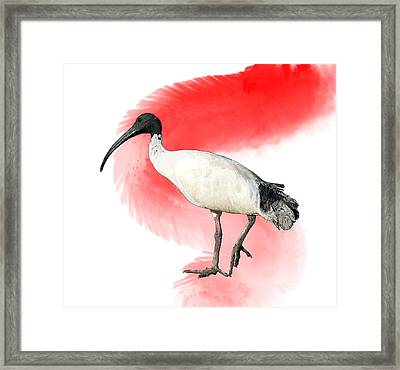 I Is For Ibis Framed Print
