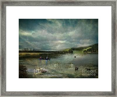 Idyllic Swans Lake Framed Print