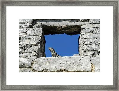 Iguana At Tulum Ruins Framed Print