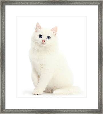 Framed Print featuring the photograph I'm All White by Warren Photographic