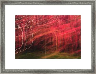 In Depth Of A Forest Framed Print