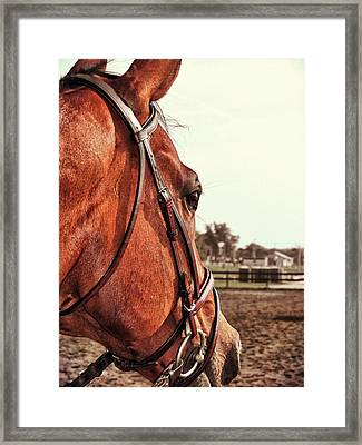 In French Chevel Framed Print