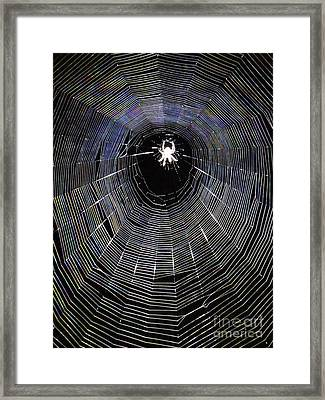 In The Web Framed Print