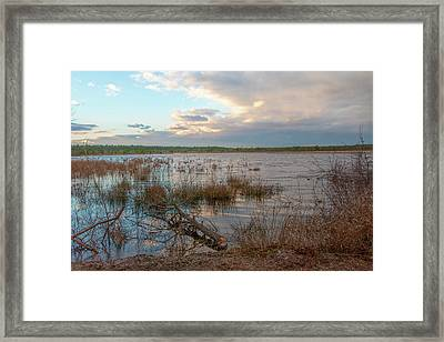 Framed Print featuring the photograph Incoming In The New Jersey Pine Barrens by Kristia Adams