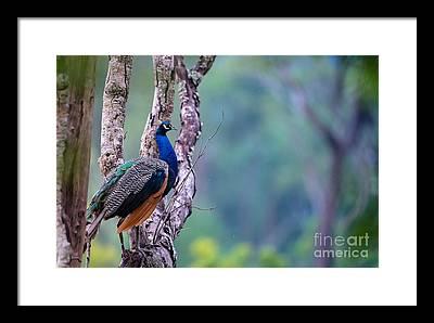 Kerala Photographs Framed Prints