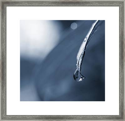 Framed Print featuring the photograph Indigo by Michelle Wermuth