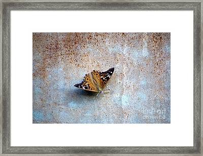 Industrious Butterfly Framed Print