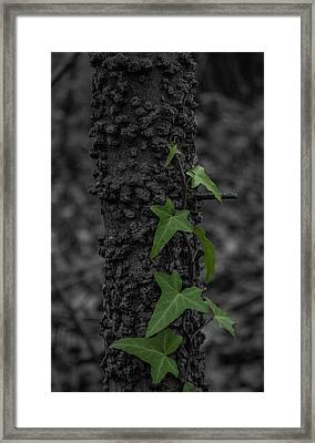 Industrious Ivy Framed Print
