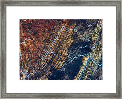 Ingrained Framed Print