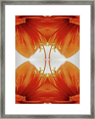 Inside An Amaryllis Flower Framed Print