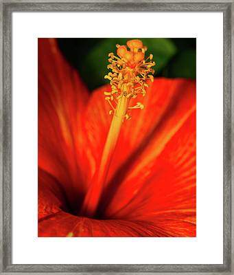 Into A Flower Framed Print