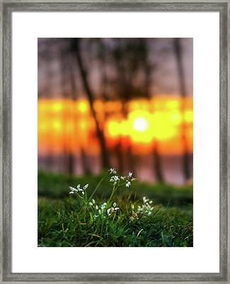 Framed Print featuring the photograph Into Dreams by Davor Zerjav