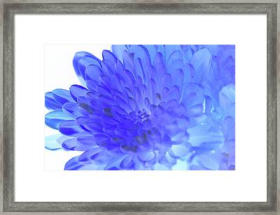 Inverted Flower Framed Print