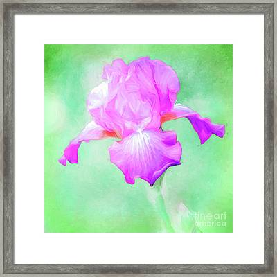 Iris Ready To Fly Framed Print