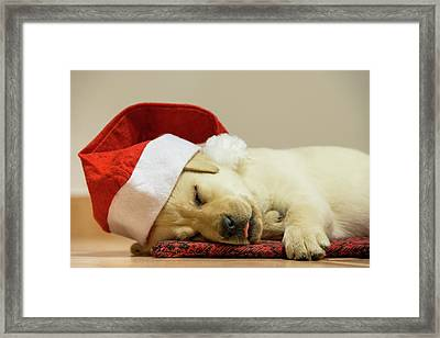 Is There A Santa For Dogs Framed Print by Stefan Cioata
