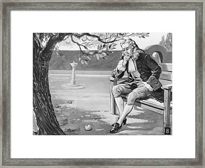 Isaacs Apple Framed Print by Hulton Archive