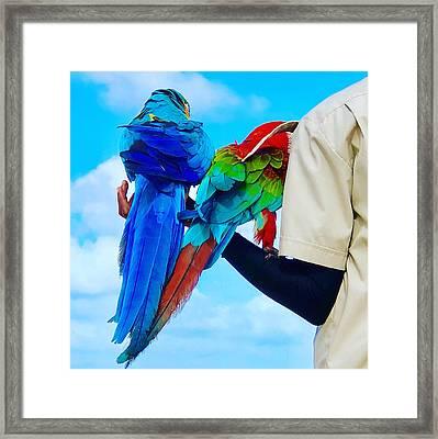 Island Birds  Framed Print