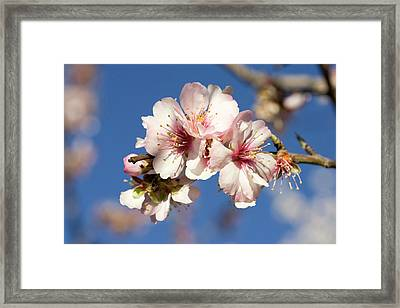 Italy, Tuscany, Elba, Sweet Chestnut Framed Print by Westend61