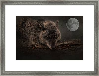 Its A Lonely Night  Framed Print