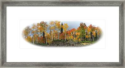 It's All About The Trees Framed Print