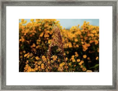 Beautiful Nature Framed Print