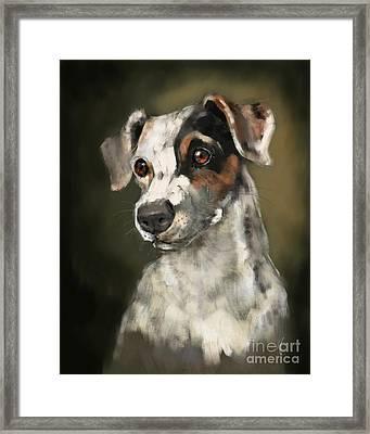 Jack Russell Terrier Framed Print