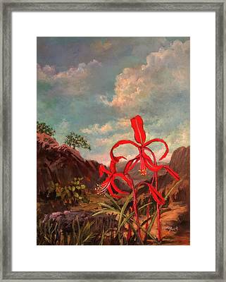 Jacobean Lily Of Mexico Framed Print
