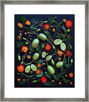 Jamaican Burr Cucumbers Framed Print