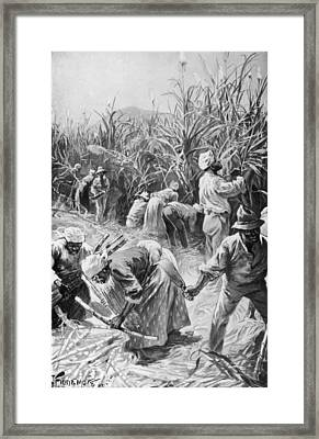 Jamaican Cane Cutters Framed Print by Hulton Archive