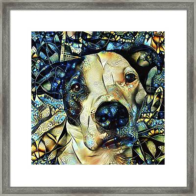 Joshua The Staffordshire Terrier Great Dane Cross Framed Print