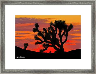 Joshua Tree At Sunset Framed Print