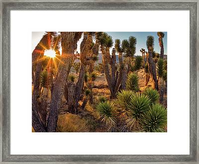 Joshua Trees Framed Print by Leland D Howard