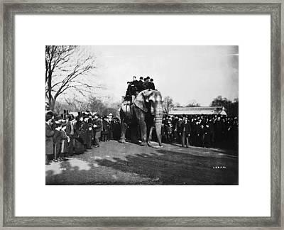 Jumbo At London Zoo Framed Print by London Stereoscopic Company