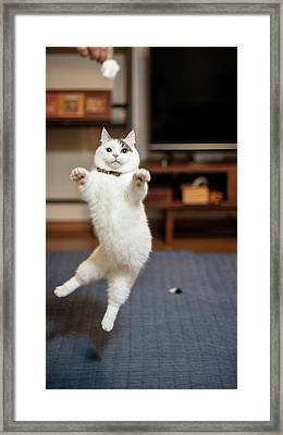 Jumping Cats Framed Print by Nazra Zahri