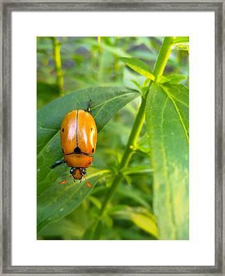 June Bug Framed Print