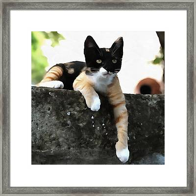 Just Chillin Tricolor Cat Framed Print