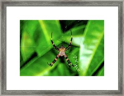 Just Hanging Framed Print