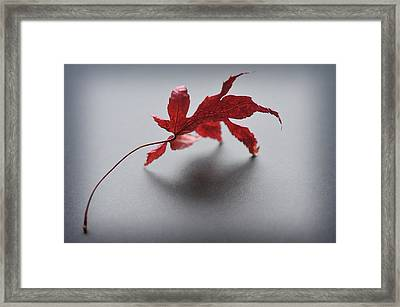 Framed Print featuring the photograph Just One by Michelle Wermuth